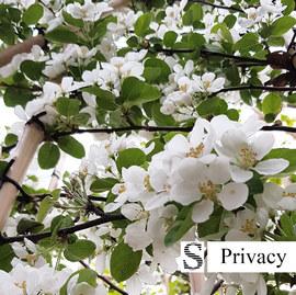 Leibomen-en-bloemen.jpg