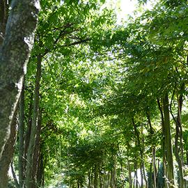 natuurlijkeparasolbomen.jpg
